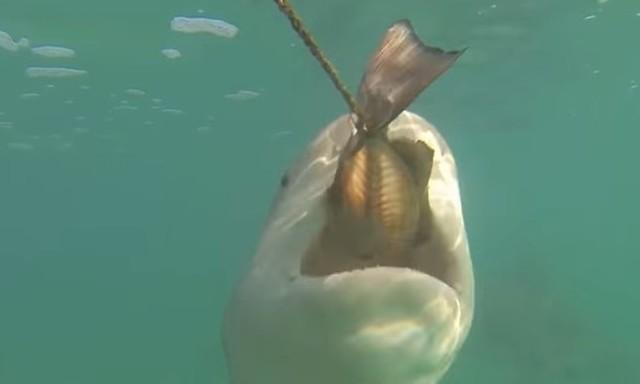 サメは磁石に弱い.jpg