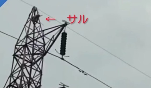 サルの大ジャンプ.jpg