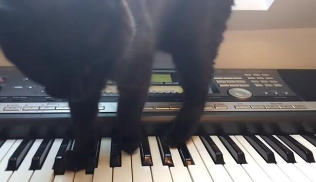 シュールな曲を弾くネコ.jpg