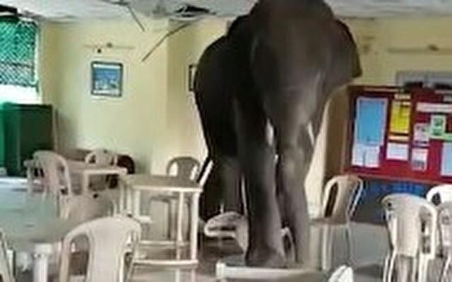 ゾウが宿舎にやってきた.jpg