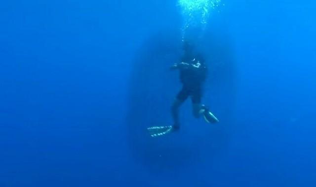 ダイバーが魚に囲まれた理由.jpg