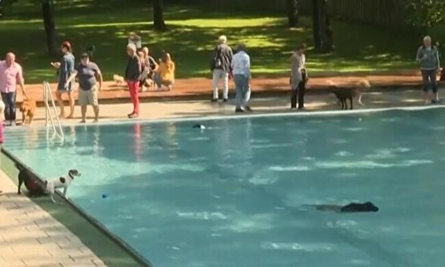 ドイツで犬にプールを解放.jpg