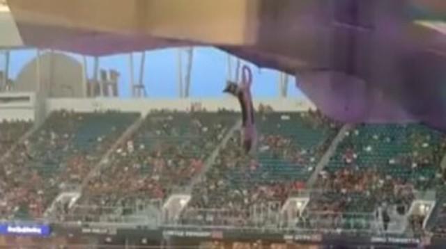 ネコがスタジアムの屋根から落ちる.jpg