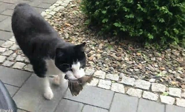 ネコがトリを捕獲.jpg