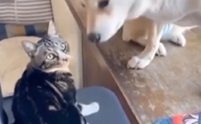 ネコが犬に責任をすりつける.png