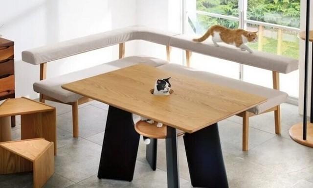 ネコが顔を出す穴が開いたテーブル.jpg