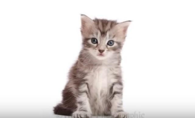 ネコの10か月の成長記録.jpg