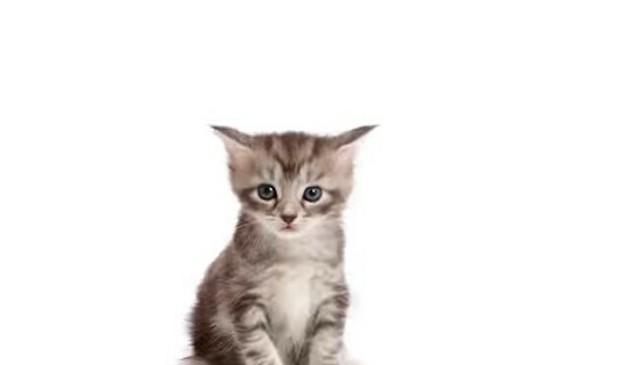 ネコの成長タイムラプス.jpg
