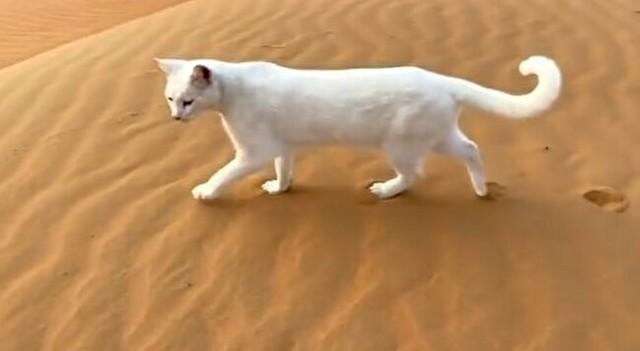 ネコの美しい歩き方.jpg