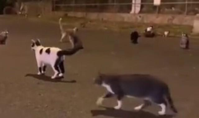 ネコを集める音声がこれ.jpg