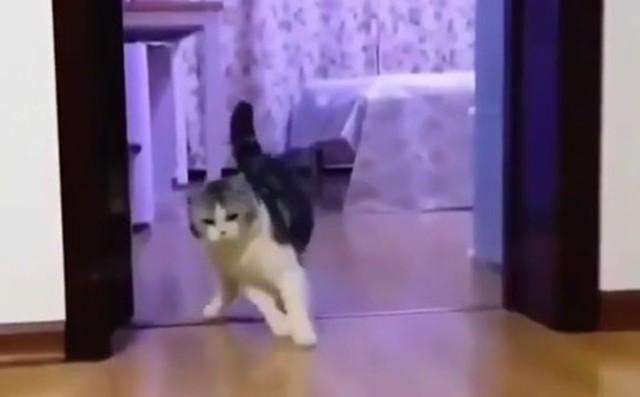 ネコを騙す透明な障害物.jpg