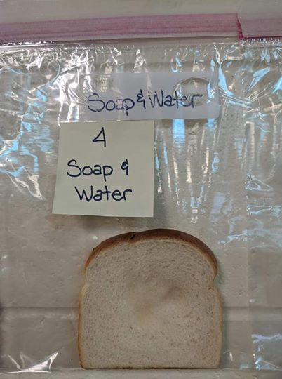 パンでバイキン実験検証 (3).jpg