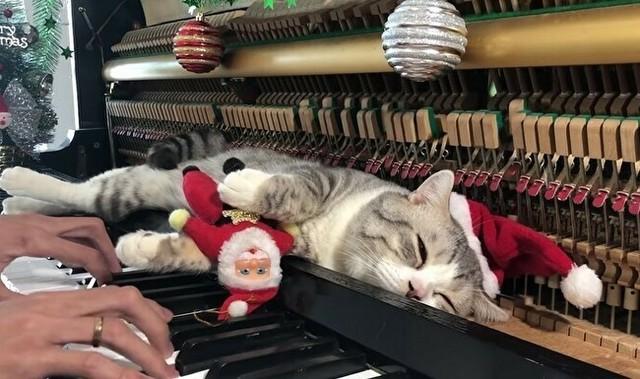 ピアノの上のネコ.jpg