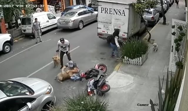 ピットブルから飼い犬を守るニンゲン.jpg