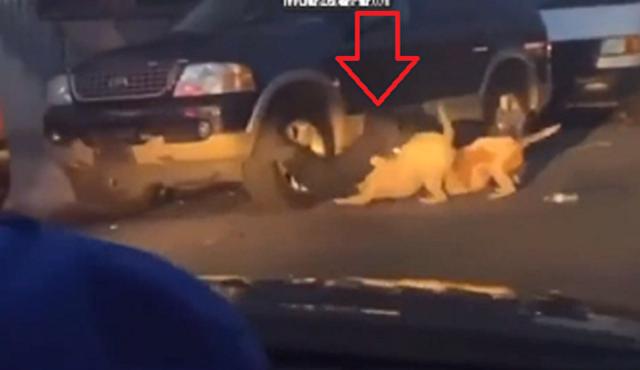 ピットブルに襲われている男性を助ける独特な救助方法.png