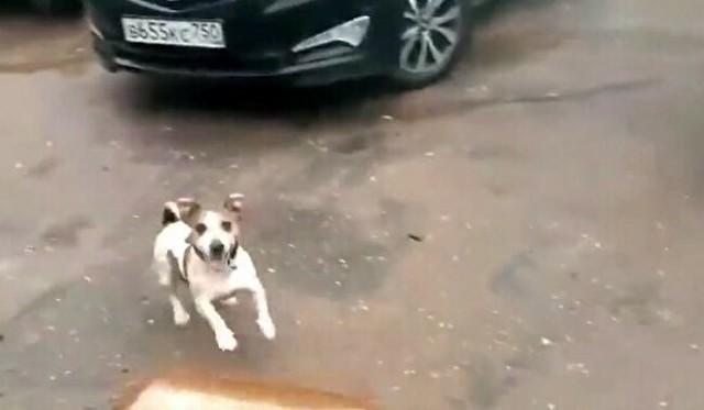 ペットボトル爆発犬.jpg
