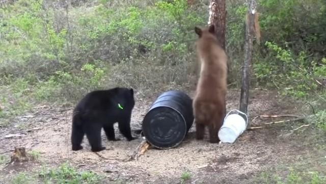 ボウガンによるクマの駆除.jpg