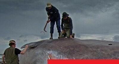 マッコウクジラが口を開けた画像.jpg