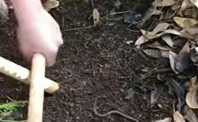 ミミズを地面から這い出させる方法.jpg