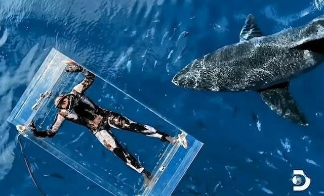 ラッコの様に海に浮かびサメを観察.jpg