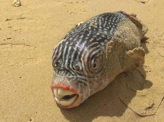ロシアの海の怪物たち (11).jpg