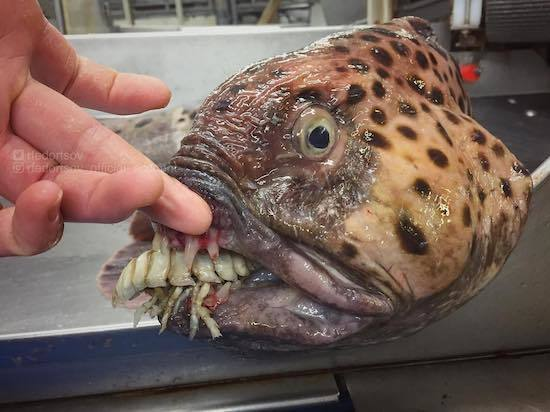 ロシアの海の怪物たち (1).jpg