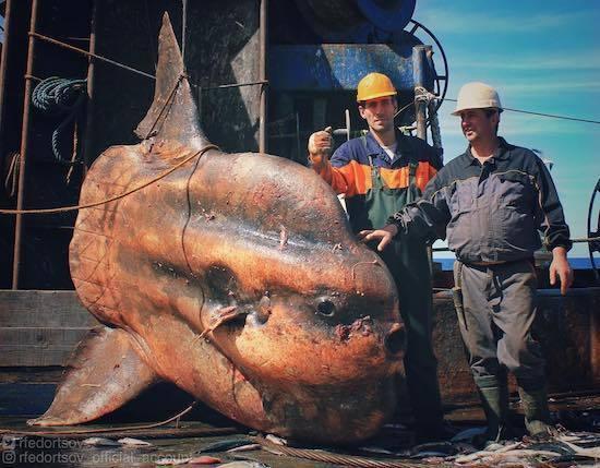 ロシアの海の怪物たち (17).jpg