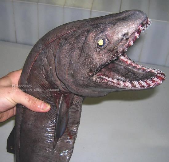 ロシアの海の怪物たち (20).jpg