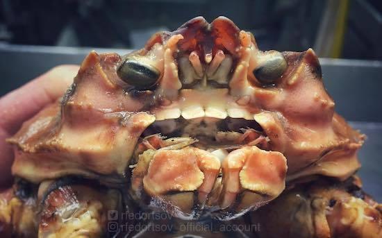 ロシアの海の怪物たち (21).jpg