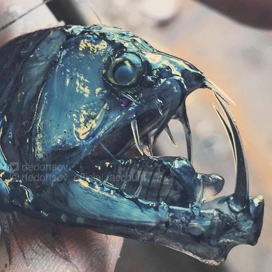 ロシアの海の怪物たち (8).jpg