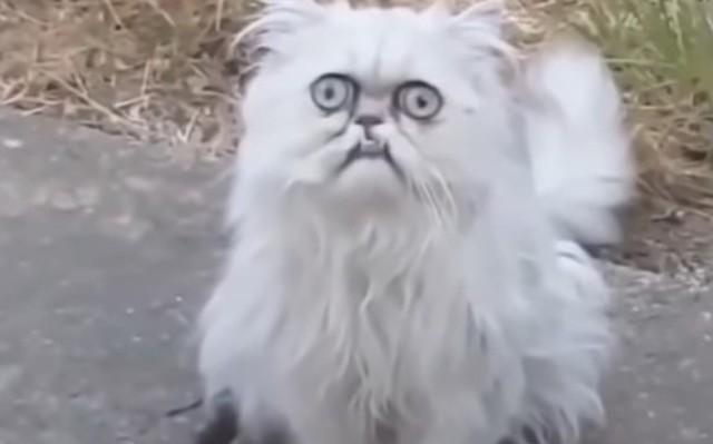 不気味で奇妙なネコが庭に.jpg