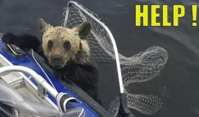 【感動】 ヒト、ありがとう。人間が野生動物を助けてあげた瞬間まとめ!!