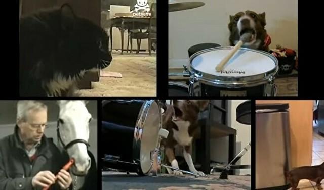 動物たちだけのバンド.jpg