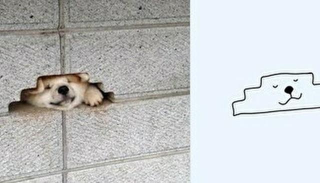 動物の変な写真を簡単なイラストに。.jpg