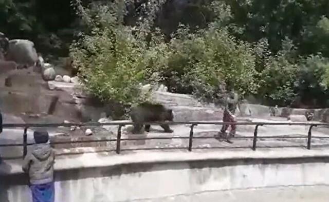 動物園でクマの檻の中に入った酔っ払い.jpg