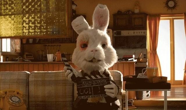 動物実験に使うウサギの日常.jpg