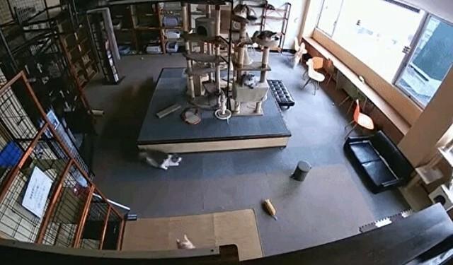 地震が起きた時のネコカフェ.jpg