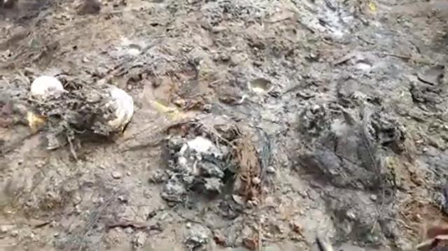 地面に火をつけると地中から卵や魚が出てくる.png