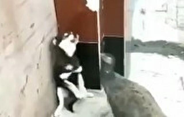 孔雀に制圧される仔犬.jpg