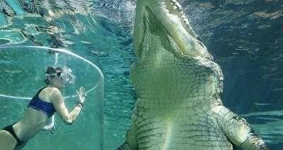 実際にいる巨大生物たち.jpg