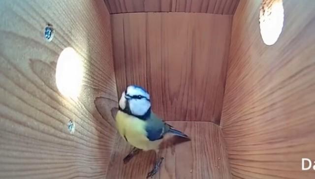 小鳥が巣箱に巣を作る一部始終.jpg