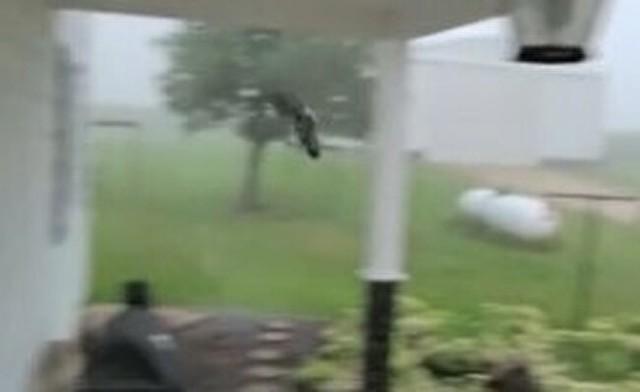 嵐の中、避難してくるハト.jpg