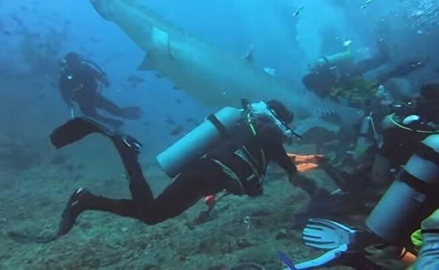 巨大なサメに襲われたダイバーの映像が怖すぎ.jpg