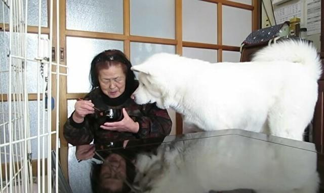 巨大な秋田犬がおばあさんを無言の圧力.jpg