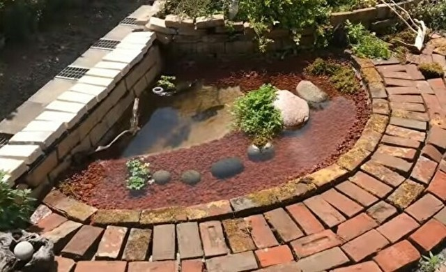 庭にビオトープの池を作る方法.jpg