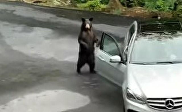 普通にクルマのドアを開けるクマの恐怖.jpg