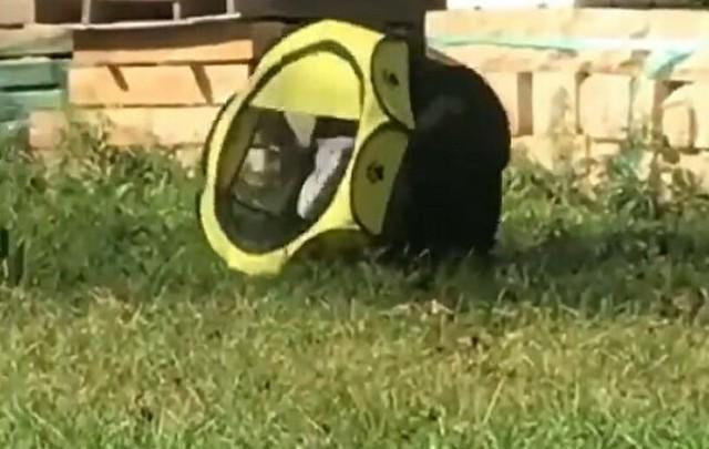 柵から出られなくなった猫.jpg