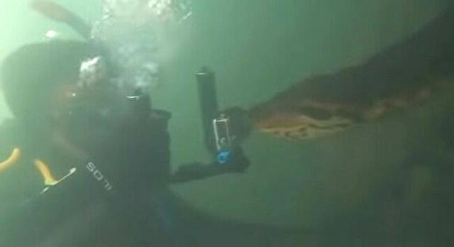 水中のアナコンダ.jpg