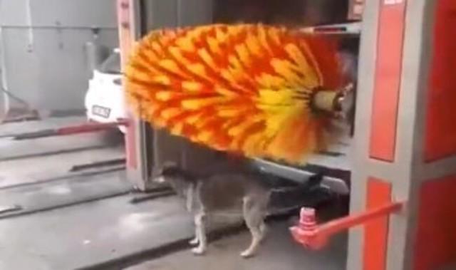 洗車場で体を洗う犬.jpg