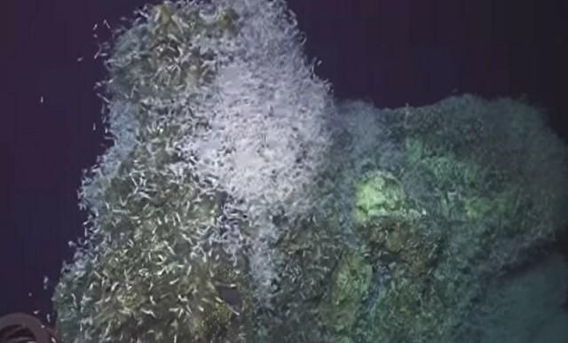 海底地震の時のエビの反応.jpg